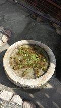 写真クチコミ:水鉢