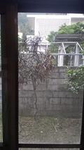 写真クチコミ:窓の外
