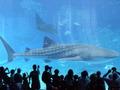 美ら海水族館も近くて良いホテルですた