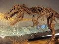 恐竜博物館 その1