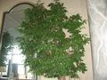 大きい観葉植物。
