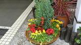 エントランスの花たち。