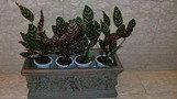 観葉植物。