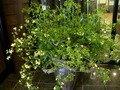 エントランスのお花。