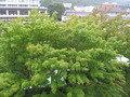 ベランダからの眺め。