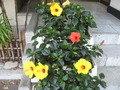 キレイなお花。