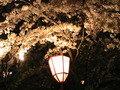 弘前城前のぼんぼり