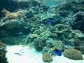 美ら海水族館を満喫。