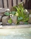 足湯にあった植物