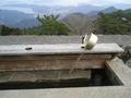 鳥羽ビューホテル花真珠を出て伊勢志摩スカイラインへ