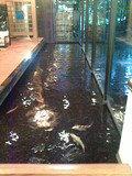 ロビー売店の横の鯉
