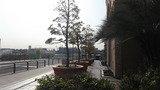 ホテルの横にも植樹が