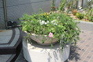 鉢植えもたくさん配置されています