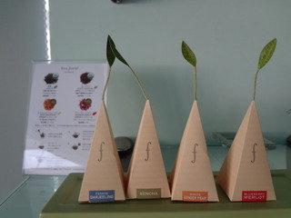 4種類の紅茶