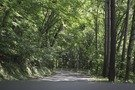キャンプ場に行く途中の道