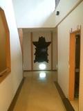 廊下にクマ