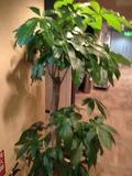 2階ロビーにあった植木