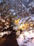 写真クチコミ:雪小道