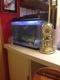 ロビーの飼い魚