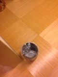 別館岩風呂ゴミ箱