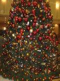 クリスマスツリーが見事