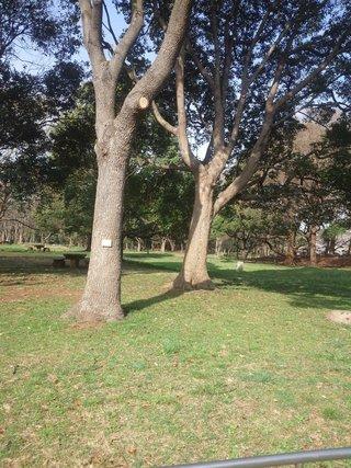 ホテルは、夢の島公園の中に有ります