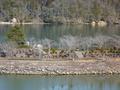 恵那峡ダム湖に浮かぶ小島