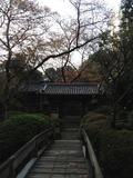 京都みたい?