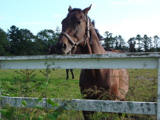 写真クチコミ:乗馬等馬とのふれあいが楽しめ、しかも清潔な宿