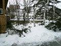風情ある雪景色