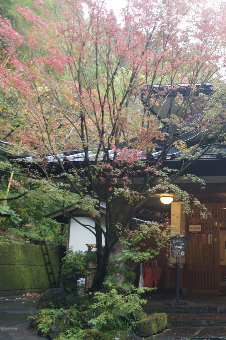 玄関横の紅葉
