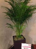2F おしゃれな観葉植物です。