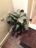 お風呂 観葉植物 写真です。