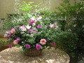 フロントお花