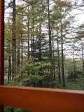 窓の外は森