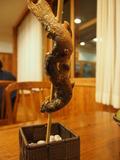 夕食:岩魚の塩焼き