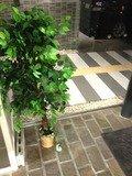 入り口の観葉植物です。雰囲気あります。