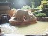 白岩の湯22m