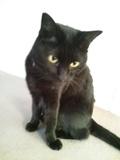 看板猫「くろちゃん」