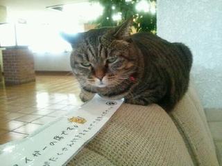 女将猫タイガー