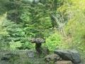 「摩耶の湯」内湯からの眺め