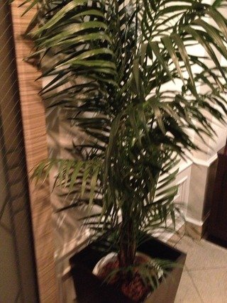 ホテル入り口おしゃれな観葉植物でした。