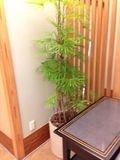 料亭 おしゃれ植物です。