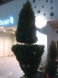 変わった形の木です。