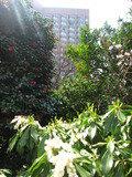 椿山荘庭園にはたくさんの花が咲いてました。