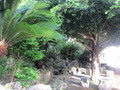 近くには琉球式庭園があります。