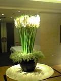 ロビーのお花です
