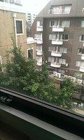 窓からは緑も見えました
