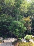 ホテル庭園内の木々