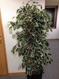 エレベーターホール観葉植物